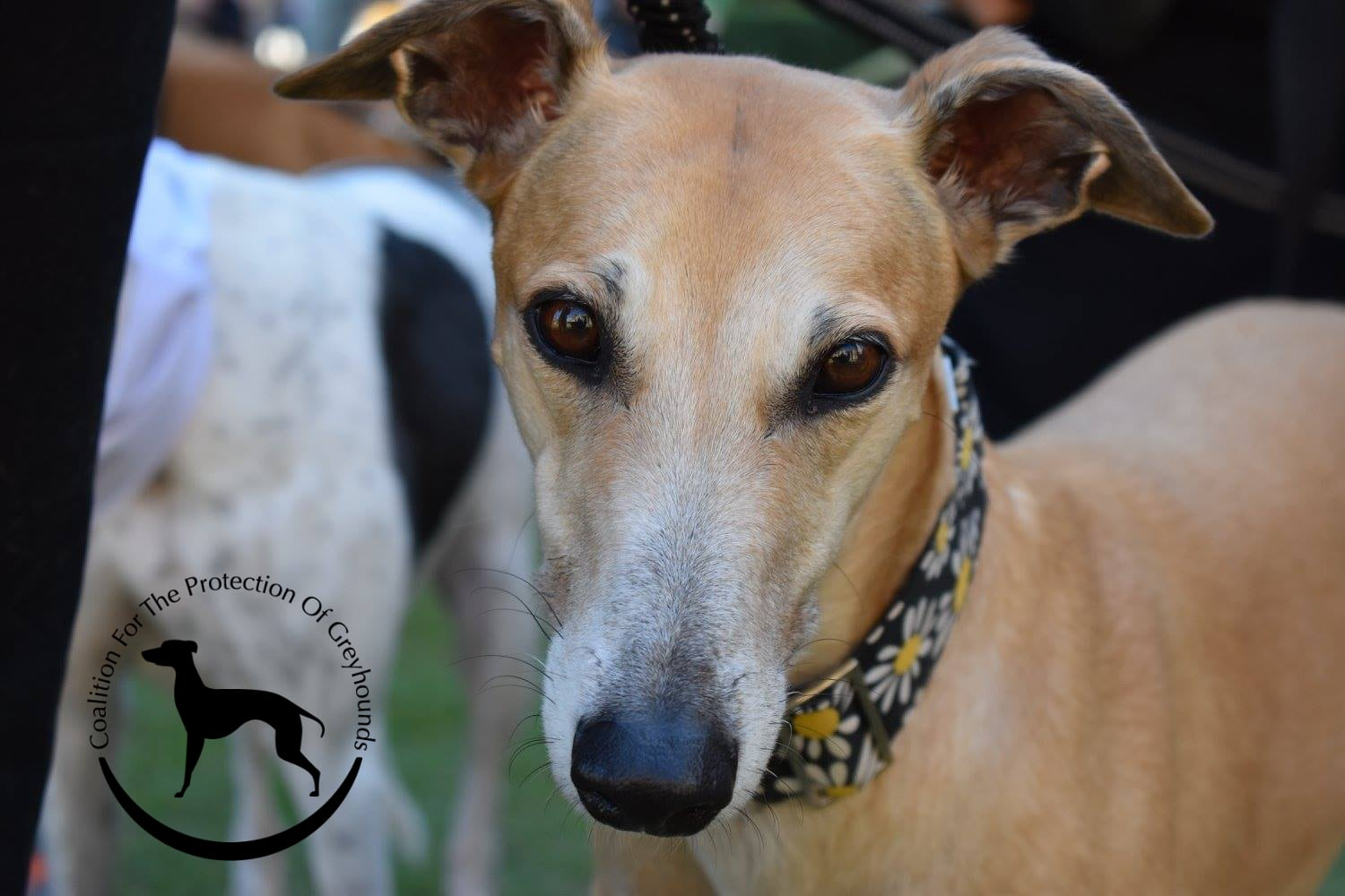 Greyhounds in 2017 – The Good, the Bad, and the Ugly