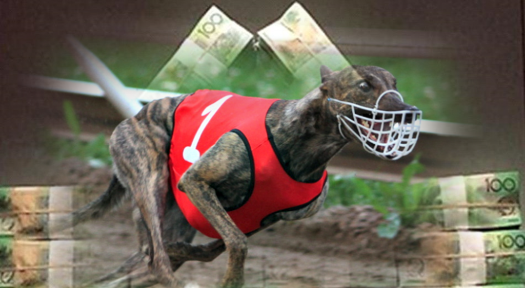 Australia – world's largest commercial greyhound racing industry