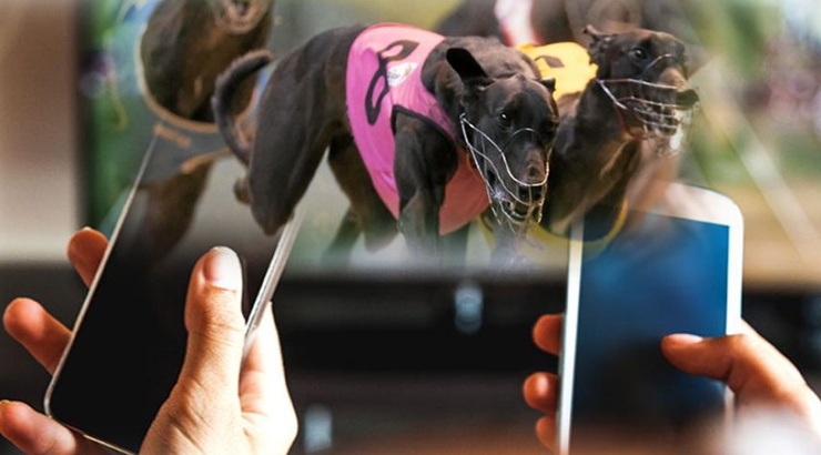 Who bets on greyhounds