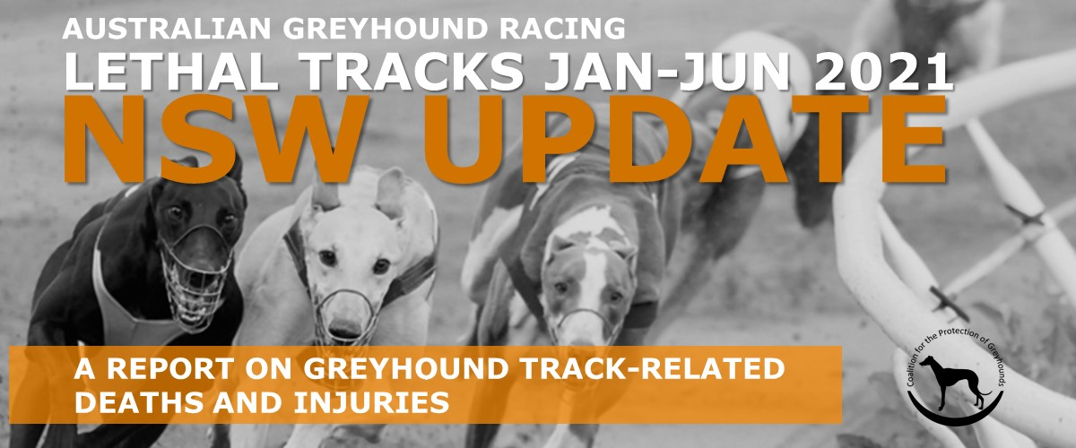 NSW greyhound track death and injuries report