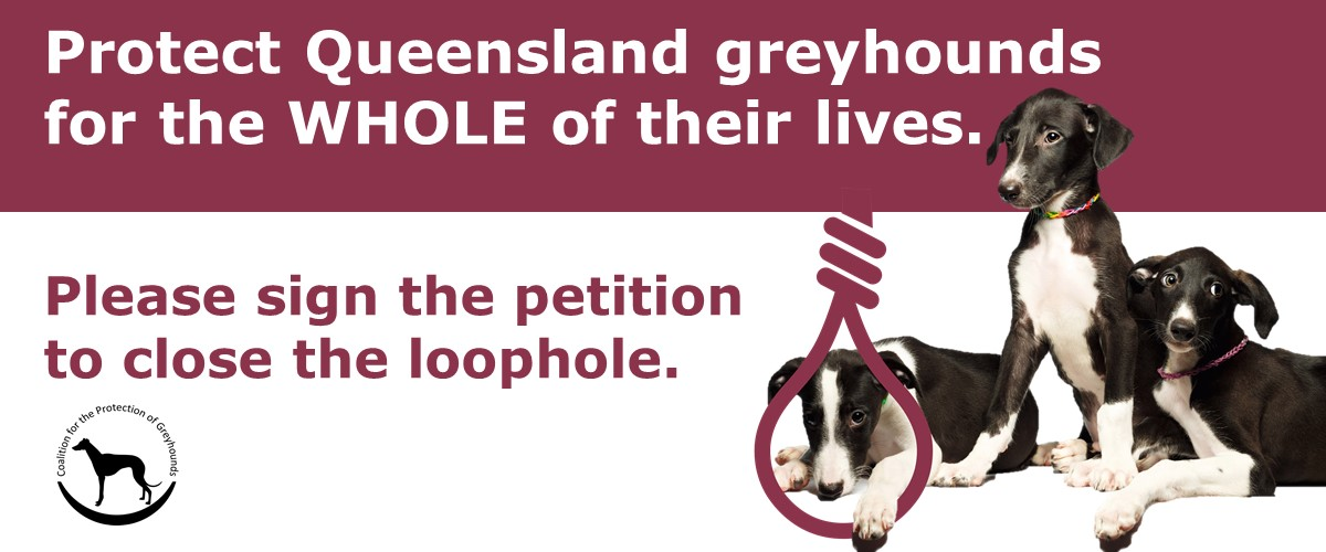 Petition to protect Queensland greyhounds