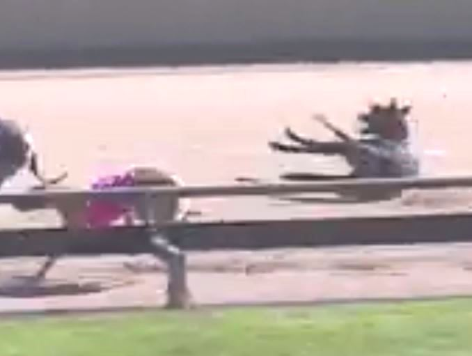 Warrnambool greyhound dies two days after racing participants voice safety fears