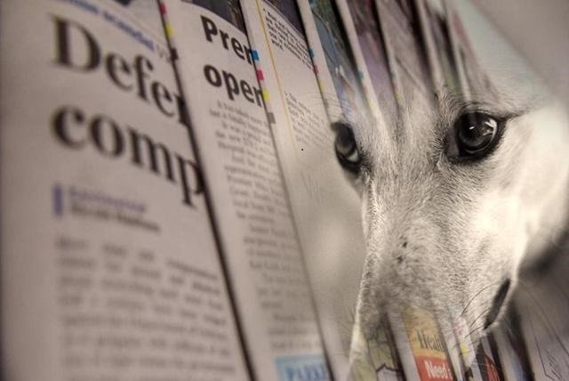"""How the greyhound racing industry """"integrates"""" with pro-racing media"""