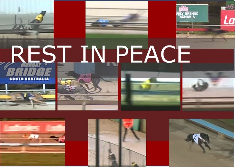 The ten greyhounds killed racing in July