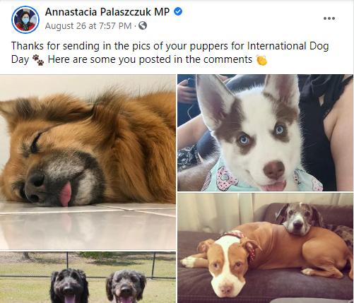 Greyhound lovers slam Palaszczuk on International Dog Day