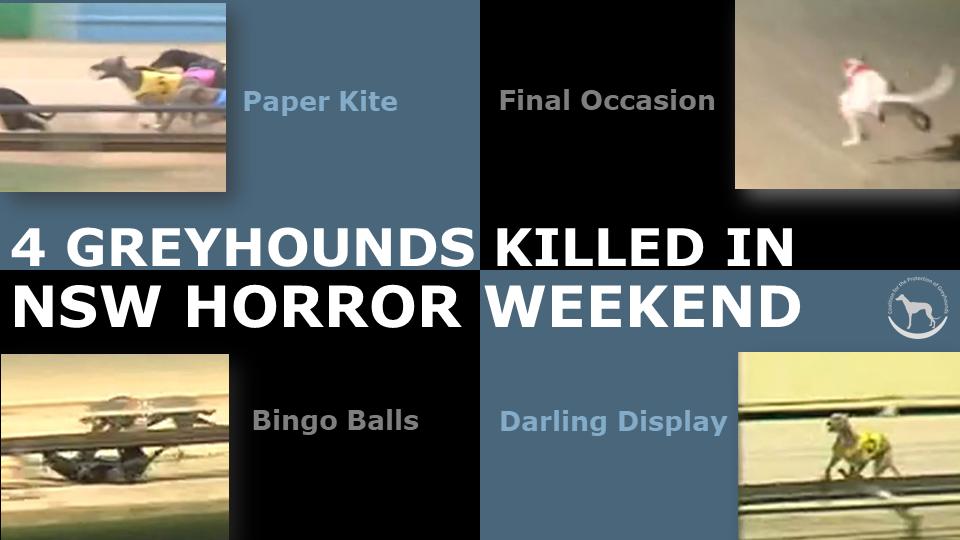 NSW tracks kill 4 dogs in horror weekend