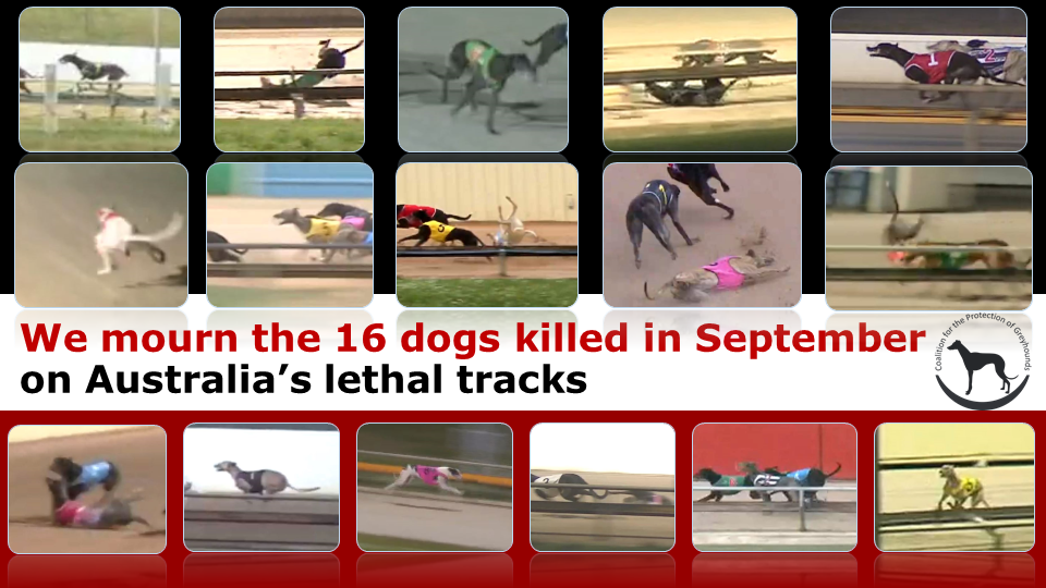 The 16 greyhounds lost in September